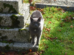 Borley church cat