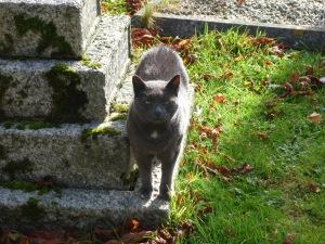 Borley church cat