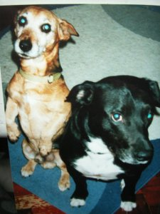 our boys. L-r Jack, Bru